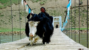 Local people, like this yak herder, depend on the Dzachu bridge to cross the river