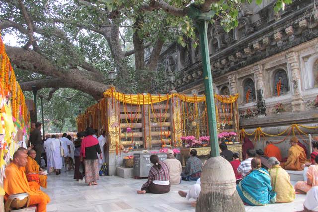 Pilgrims from around the world gather around the bohi tree at Bodh Gaya, which marks the place where the Buddha awakened.