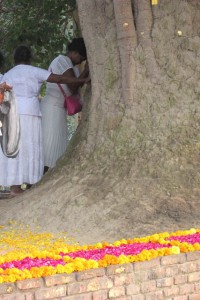 Pilgrims from around Asia gather to visit Sravasti, and to bow to the Bodhi Tree there
