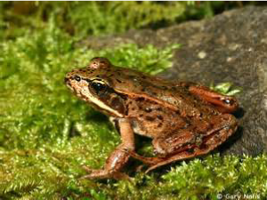 The sound of frogs accompanied us on our retreat.