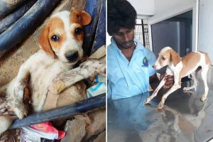 Dog Cherry, before and after rescue in Varanasi