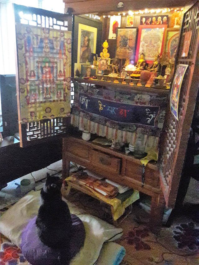 Author Teresa Lamb's cat, attracted to a Tibetan Buddhist altar